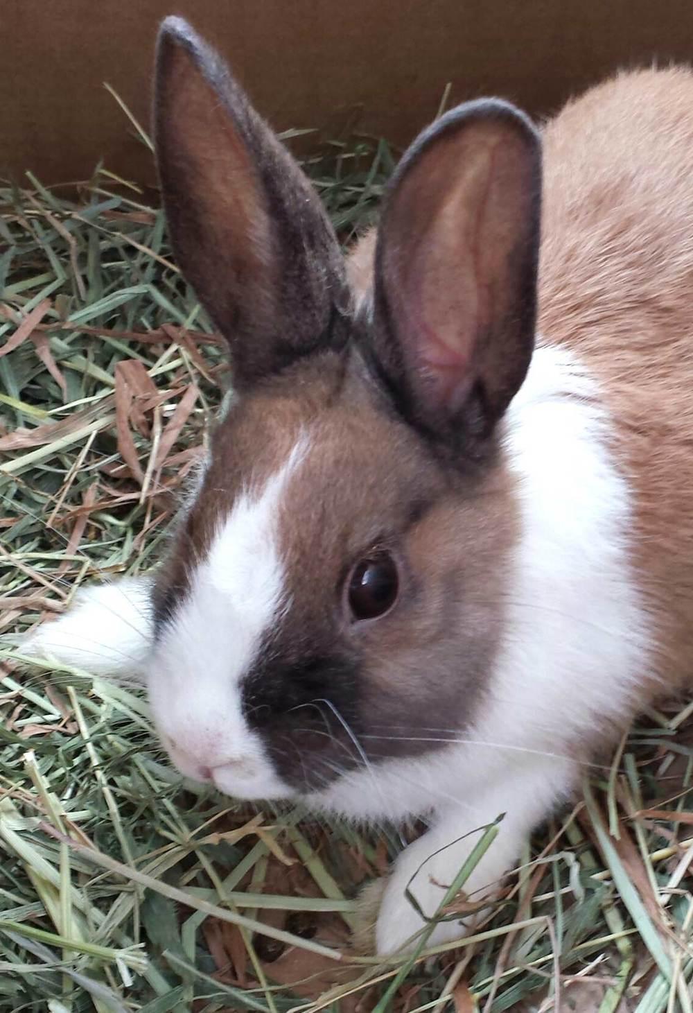 Bunny Peg leg