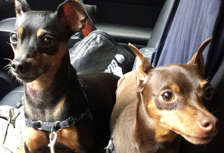 Lola and Luca