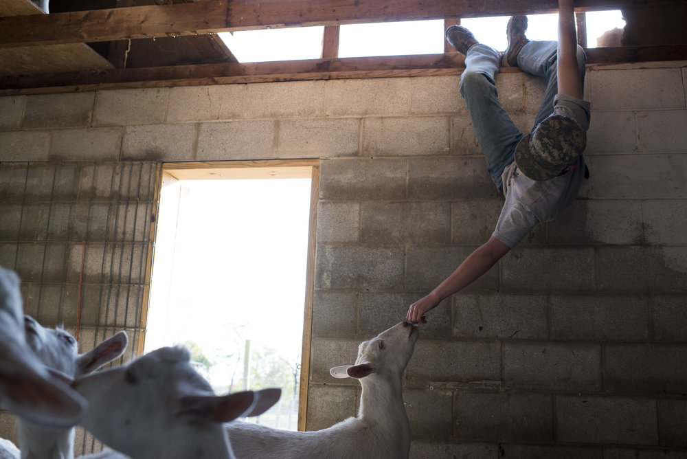 Andrew hangs from the barn rafters playing with a goat at the Keach family farm.