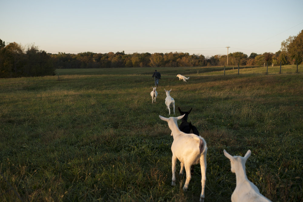 Andrew runs out into the field, trailed by Blue, his dog, and his family's goats. His father won't be home from service in the National Guard for several months.