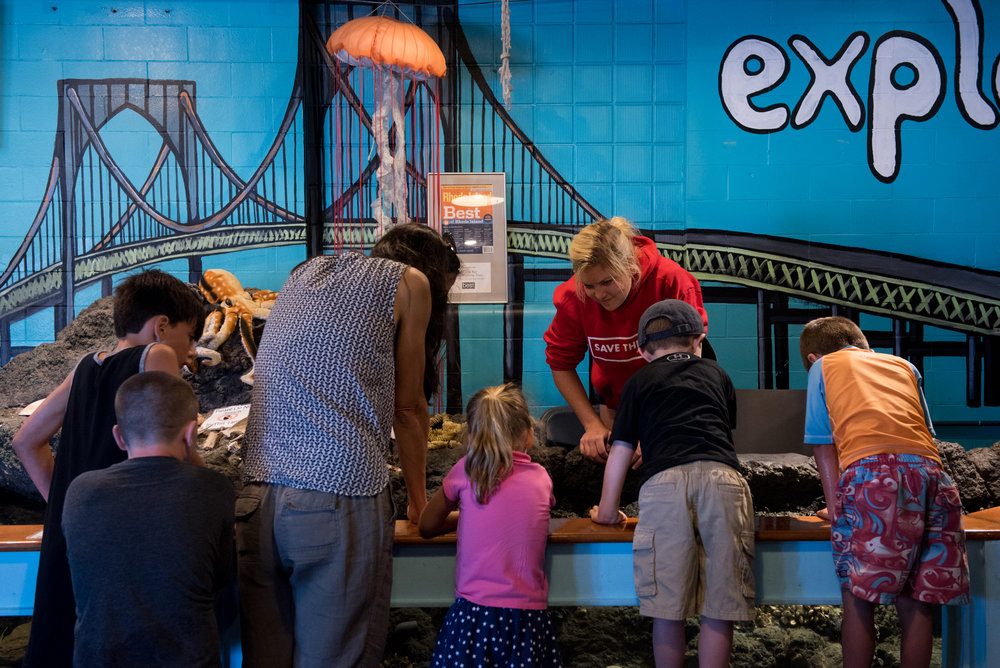 Newport, RI - 7/9/17 - Kate Hoey, a summer intern, shows children crabs and starfish during the day at Easton Beach in Newport, Rhode Island on Sunday, July 9, 2017. This beach is known for being particularly family-friendly, with available aquarium, snack bar, carousel and public showers. (Nicholas Pfosi for The Boston Globe) Topic: XXXXXXbestbeaches(2)