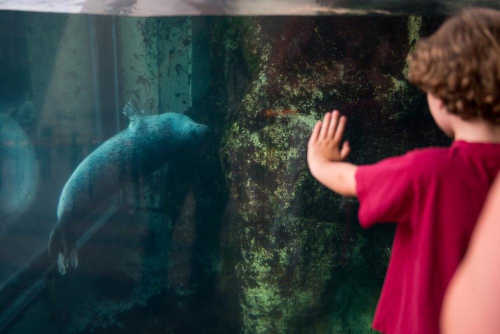 Boston, MA - 8/26/17 - A tourist watches the harbor seals at the aquarium on Saturday, August 26, 2017. (Nicholas Pfosi for The Boston Globe)