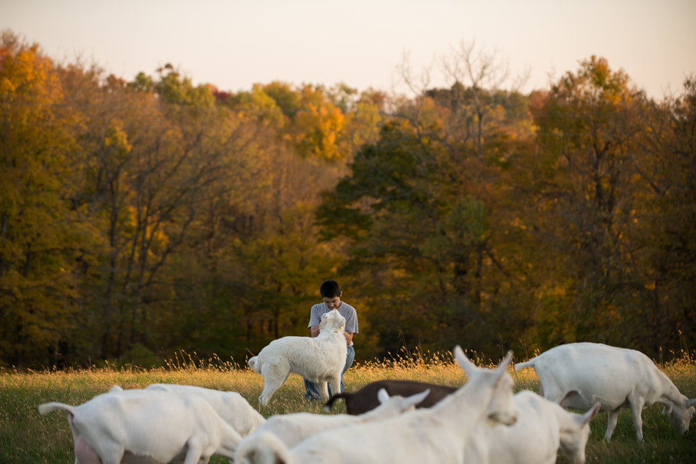 10/22/15 – Bagdad, KY – Andrew plays with Blue at the Keach family farm in Bagdad, Ky. on Thursday, Oct. 22, 2015. Amy, who's husband's military career leaves her without him for most of the year, started showing goats and selling their kids several years ago. (Photo by Nicholas Pfosi)