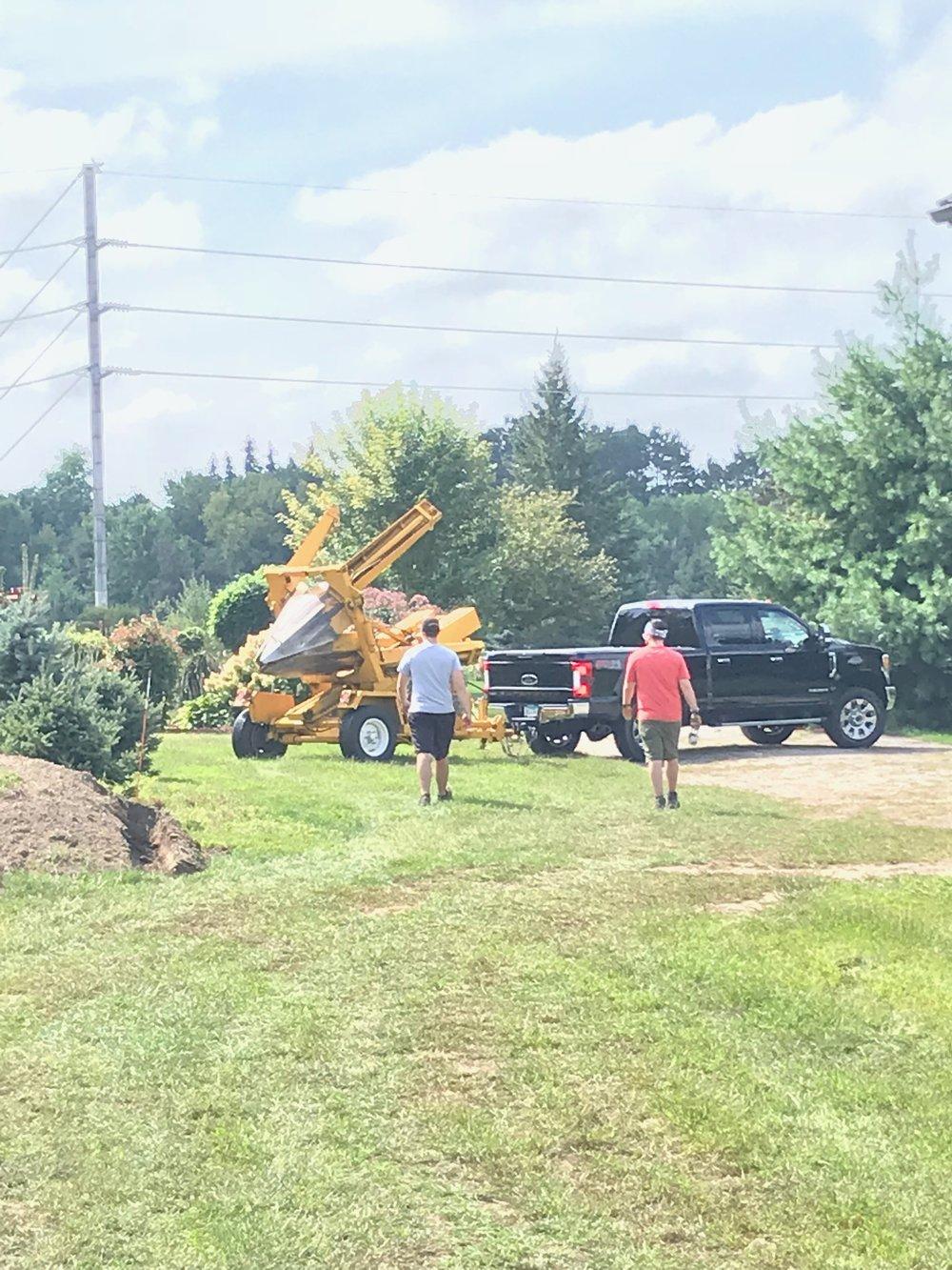 Tree Replanting
