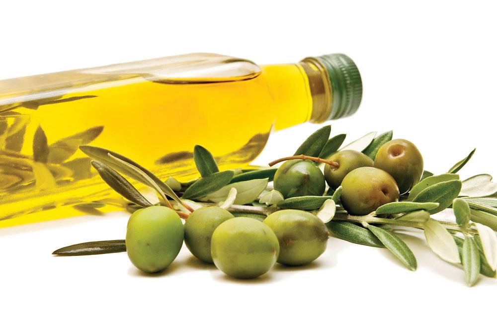 olive-oil-branch.jpg