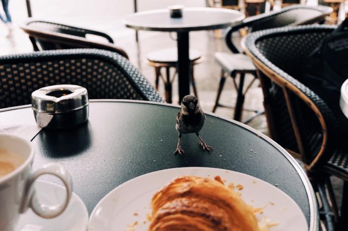 Croissant loving sparrows make you feel like a Disney Princess at breakfast.