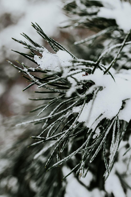 kaboompics_Close-ups of snowy trees.jpg