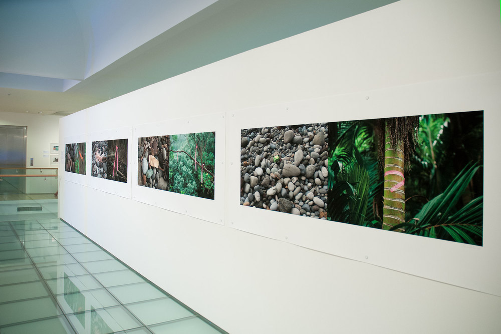 NINE ARTISTS EXPLORE THE SOUTH PACIFIC  Tauranga Art Gallery  It's said that in the 1970s, Raoul Island, once home to the largest concentrations of birdlife in New Zealand, had fallen silent...   more
