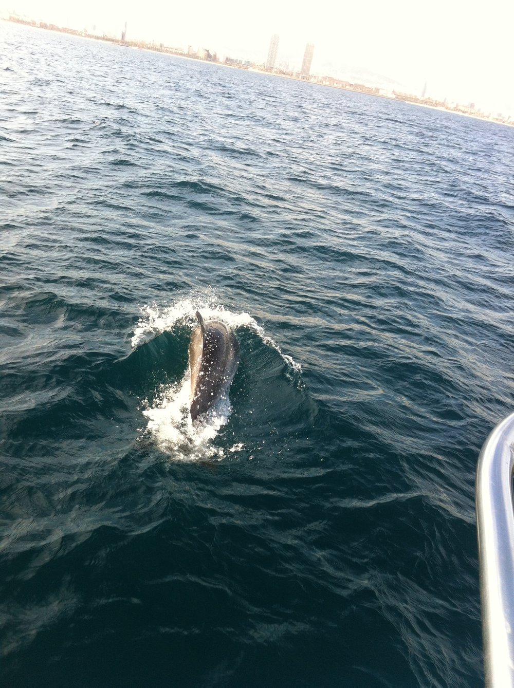 sailing with dolphins back to barcelona.jpg