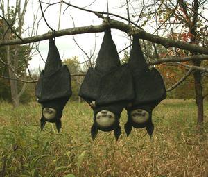 Scott Radke Bats
