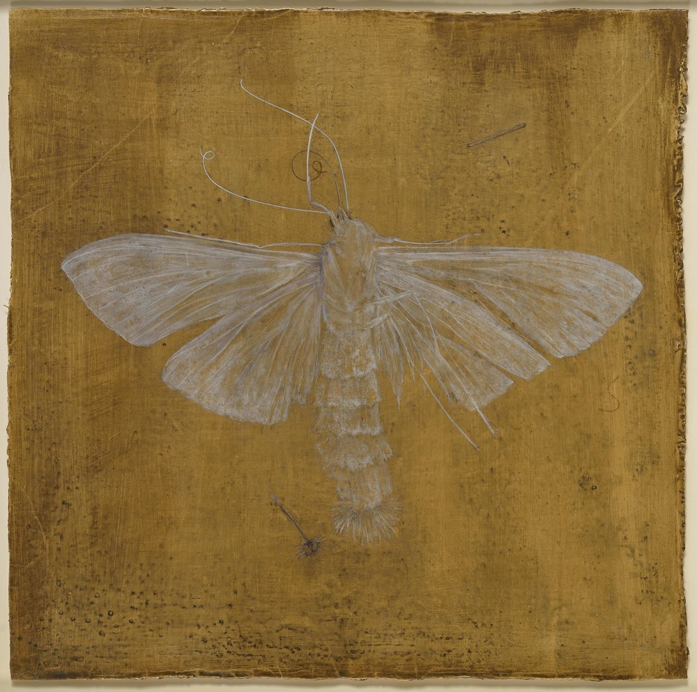 Fallen Angel - egg tempera on cloth 58 x 58 cm