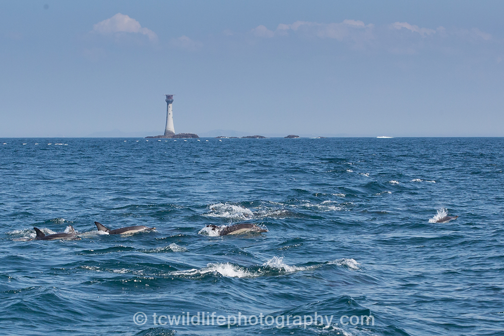 The area near the smalls lighthouse is a rich marine ecosystem and animals such as minke whales and even orca have been sighted here.