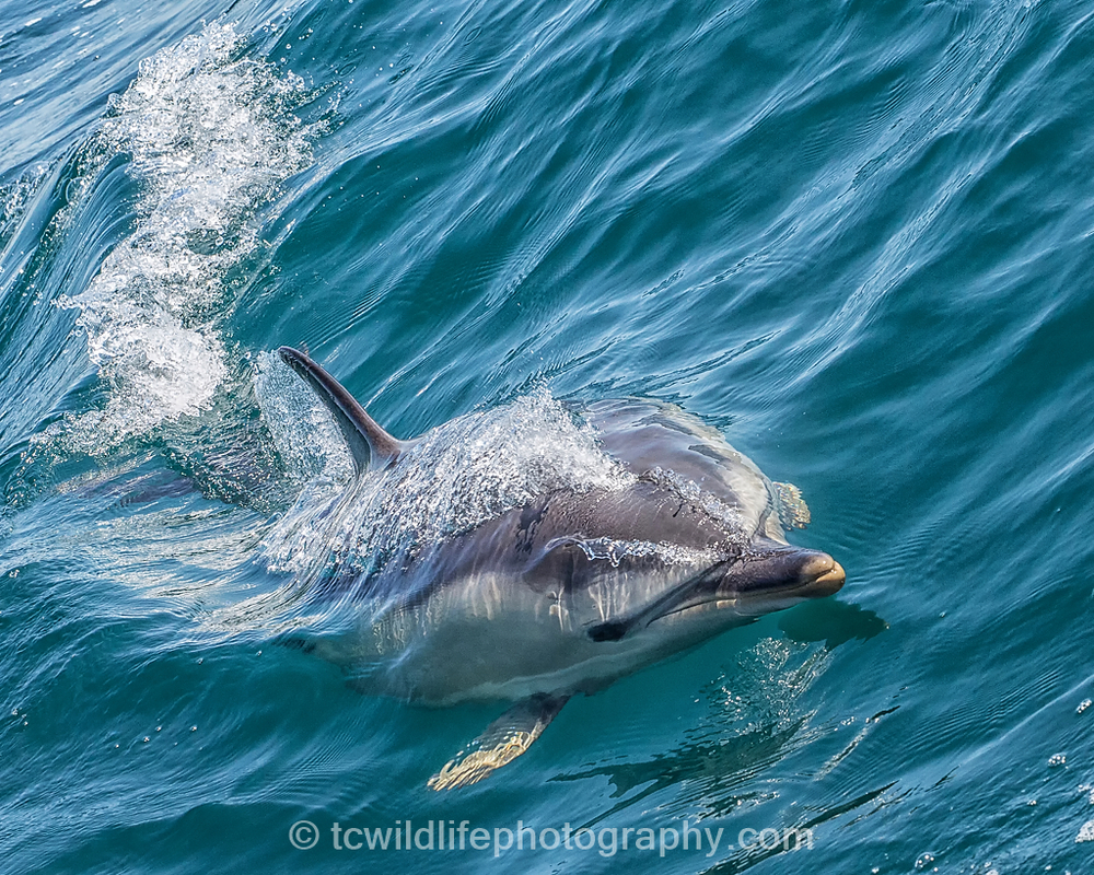 All in all a perfect day offshore with some beautiful and charismatic animals.