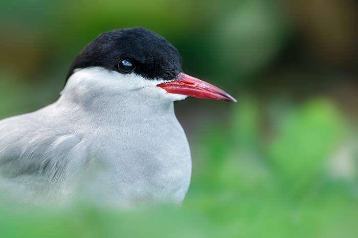 A low angle shot of a Tern