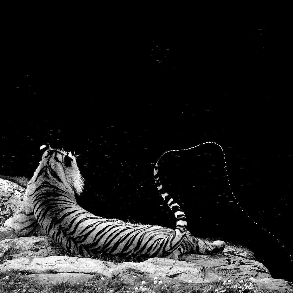 TC Zoo Art  78.jpg