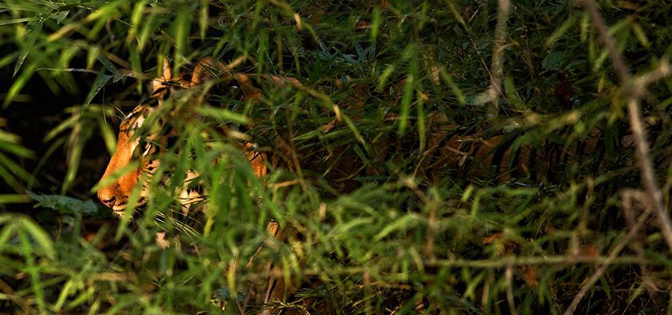 Post monsoon greens in November, 5D mk iii, 400mm f5.6