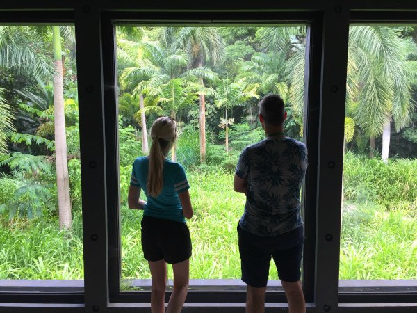 Couple Looking Out Of Window At Palm Trees And Greenery