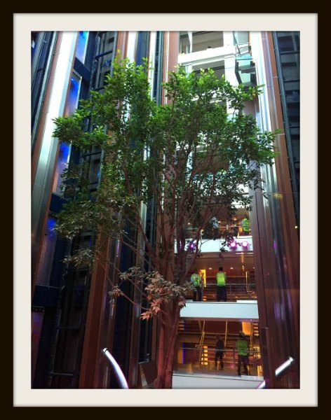 Tree onboard Celebrity Eclipse, Celebrity Cruise, Cruise Ship, Celebrity Eclipse, Cruising With Kids, Family Cruise