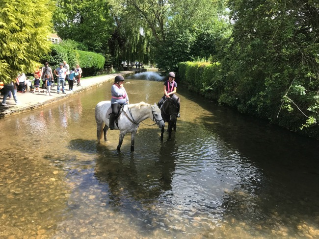 Horses In The River Bourton On The Water Cotswolds