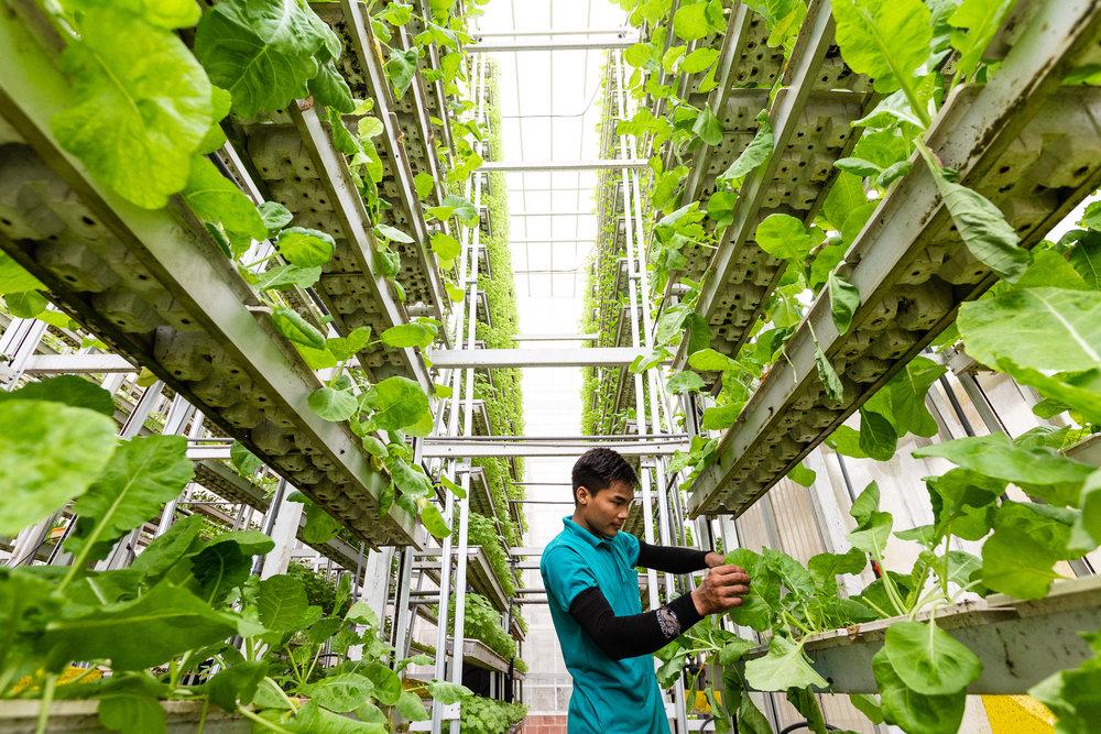 singapore-commercial-editorial-photographer-zainal-zainal-vertical-farming-skygreens-pictet-01.jpg