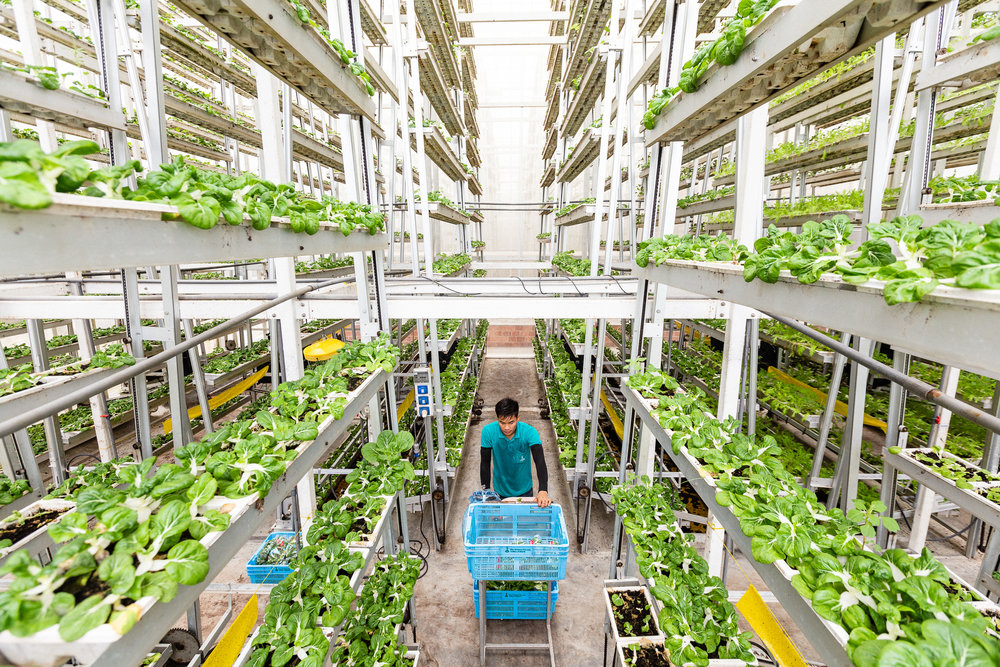singapore-commercial-editorial-photographer-zainal-zainal-vertical-farming-skygreens-pictet-03.jpg