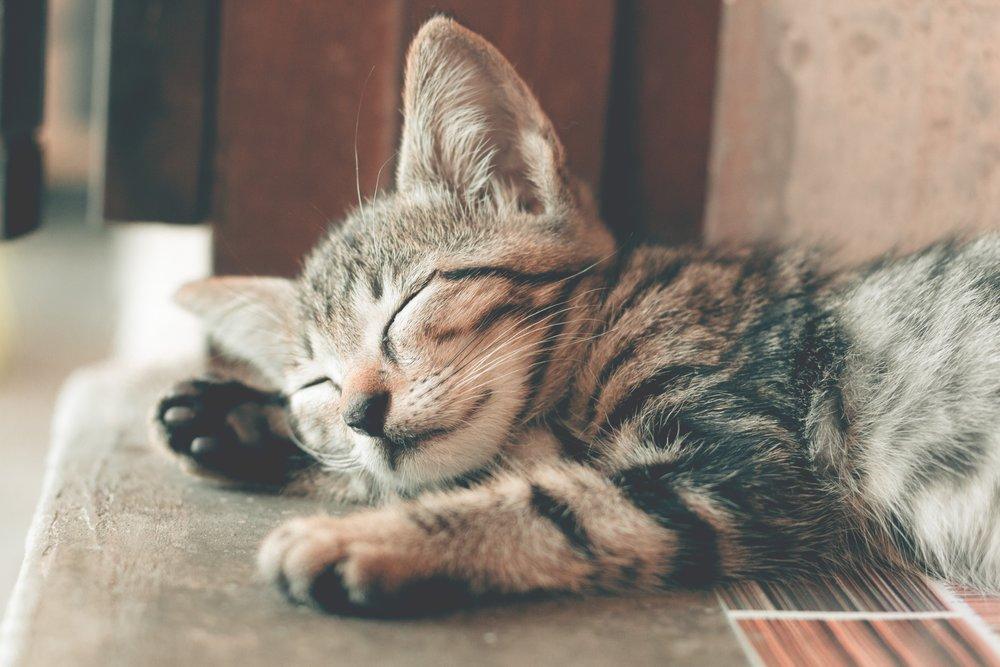 adorable-animal-animal-photography-1056251.jpg