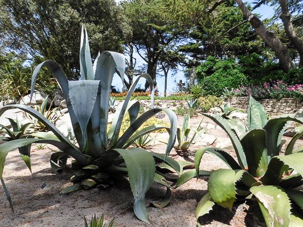 Cactus, Garden Georges Delaselle, Ile de Batz, Brittany, France