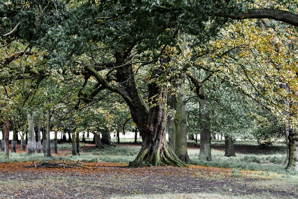 Visit Phoenix Park in Dublin, Europe's largest enclosed park.