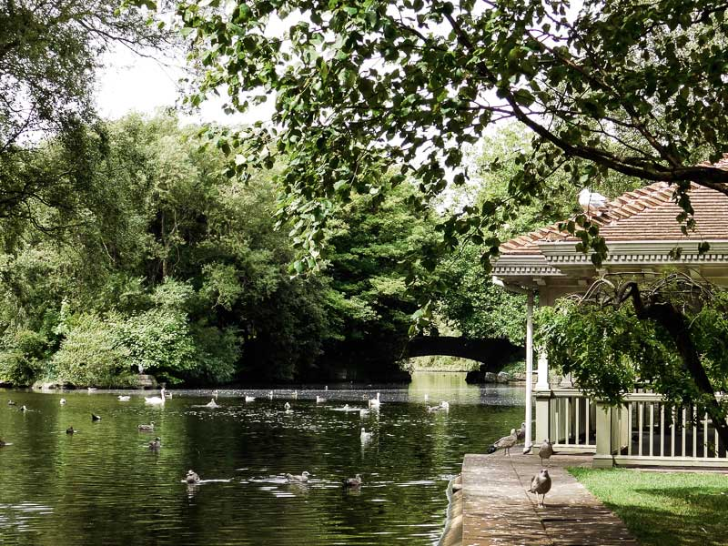 Ducks and swans in St Stephen's Green, Dublin, Ireland