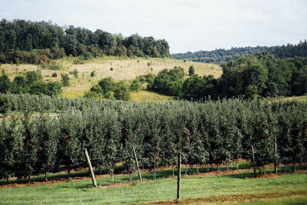 appleorchard-1.jpg