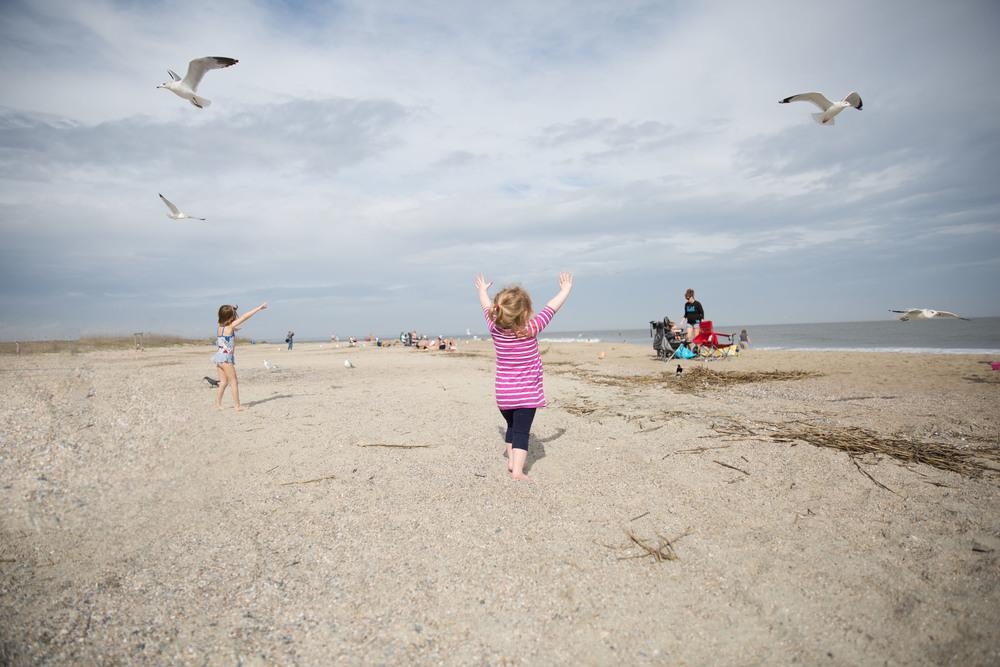 seagulls4.jpg