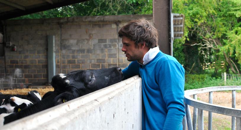 veal calves copy.png