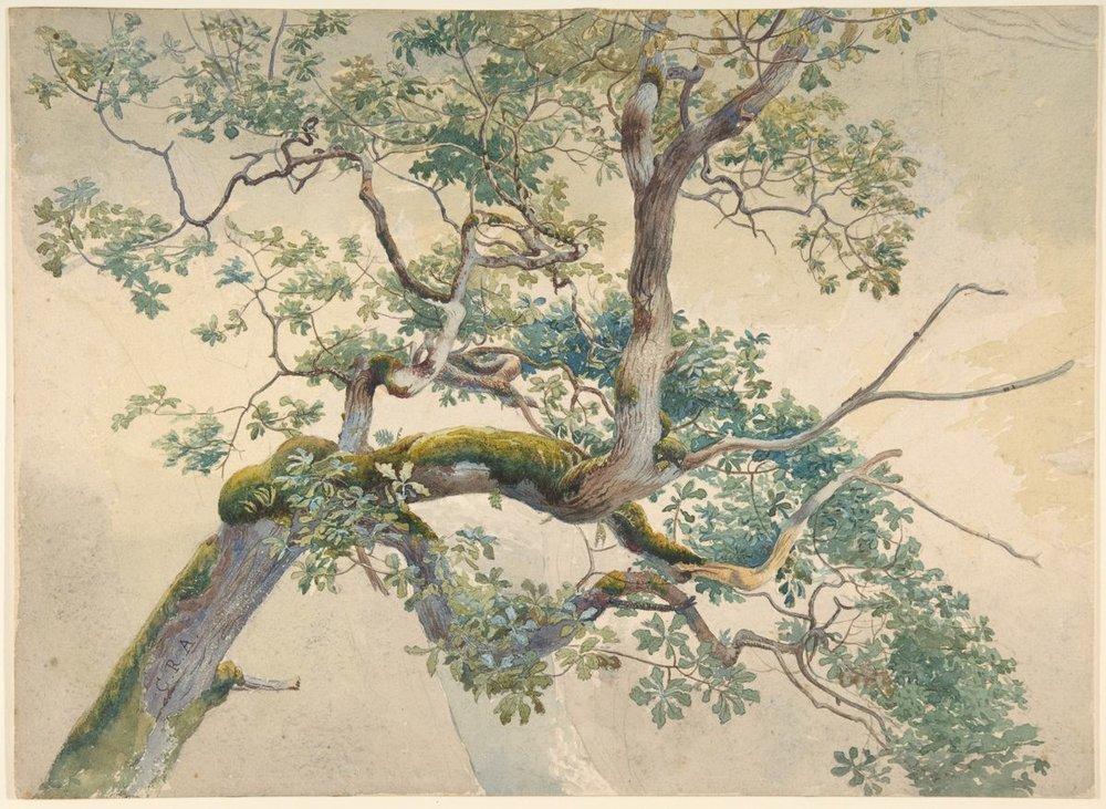 "Tree Branches, Charles Reginald Aston, (British, Birmingham 1832–1908). Watercolor over graphite; sheet, 9 1/2"" x 13"", drawings. Photo courtesy of the Metropolitan Museum of Art."