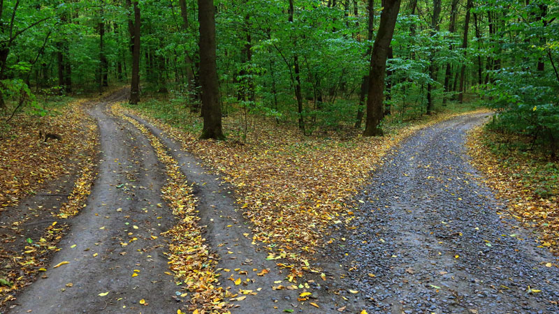 two roads in the woods