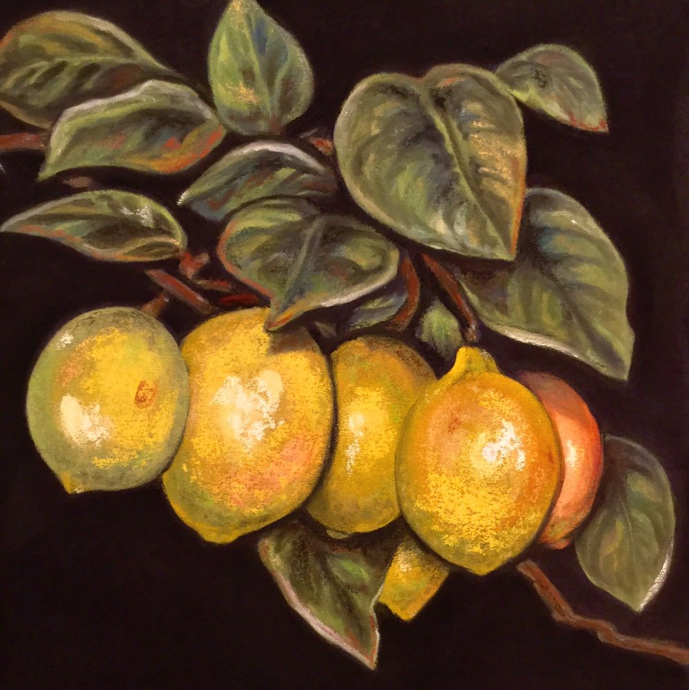 """BRANCH OF THE LEMON""  PanPastel®  Cheri Ginsburg ©"
