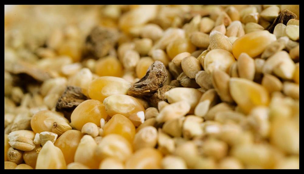 DSF_Food_043.jpg