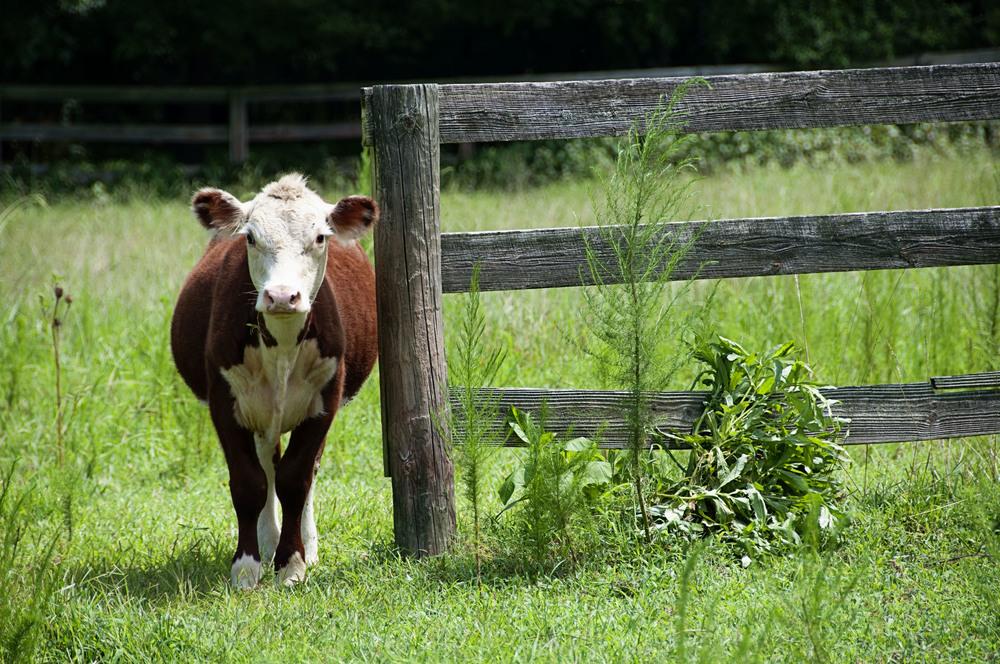 Emily Moncure NC farm Chapel Hill