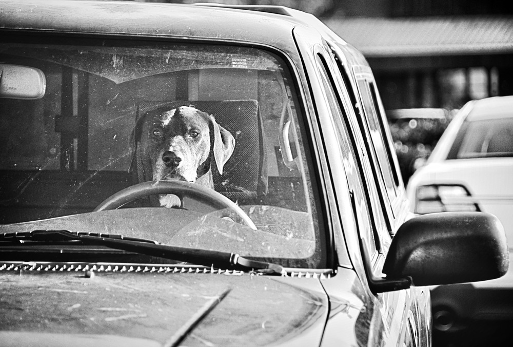 Dogcar.jpg