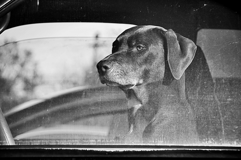 Dogcar2.jpg