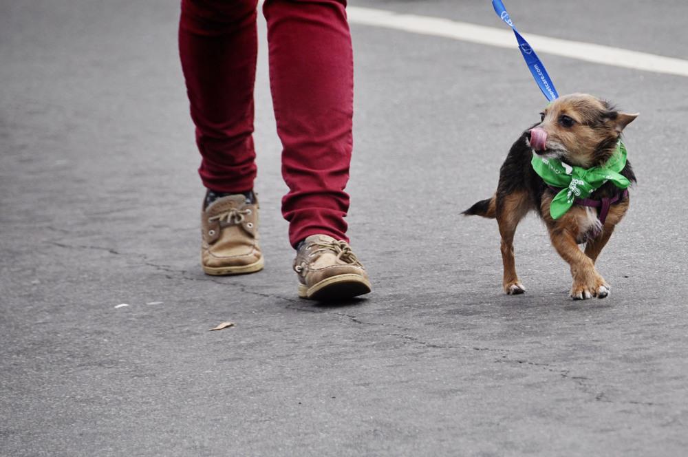 Chapel Hill-Carrboro parade -19-1.jpg