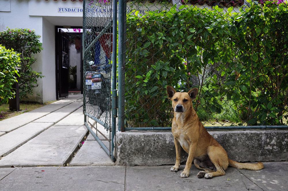 Havana317-3.jpg