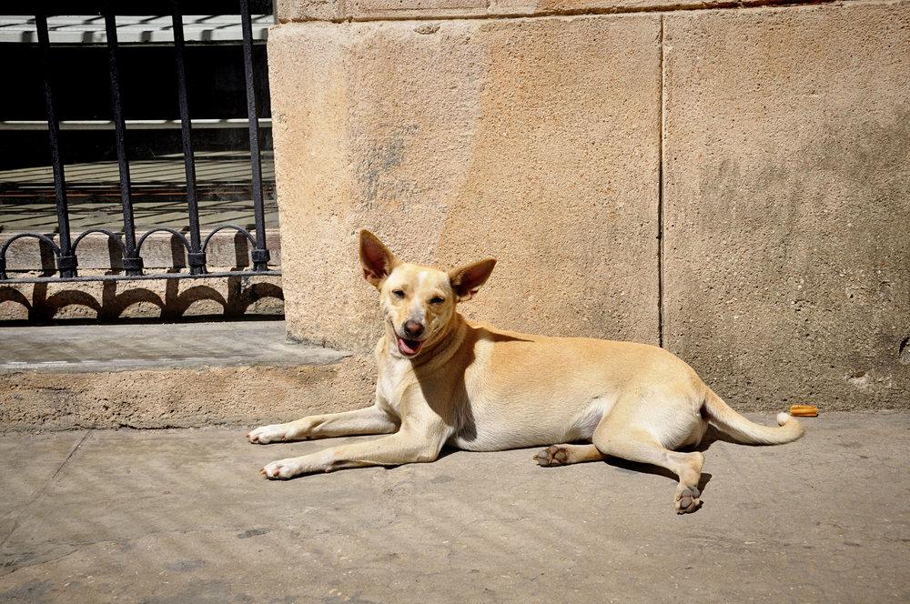 Havana313-33.jpg