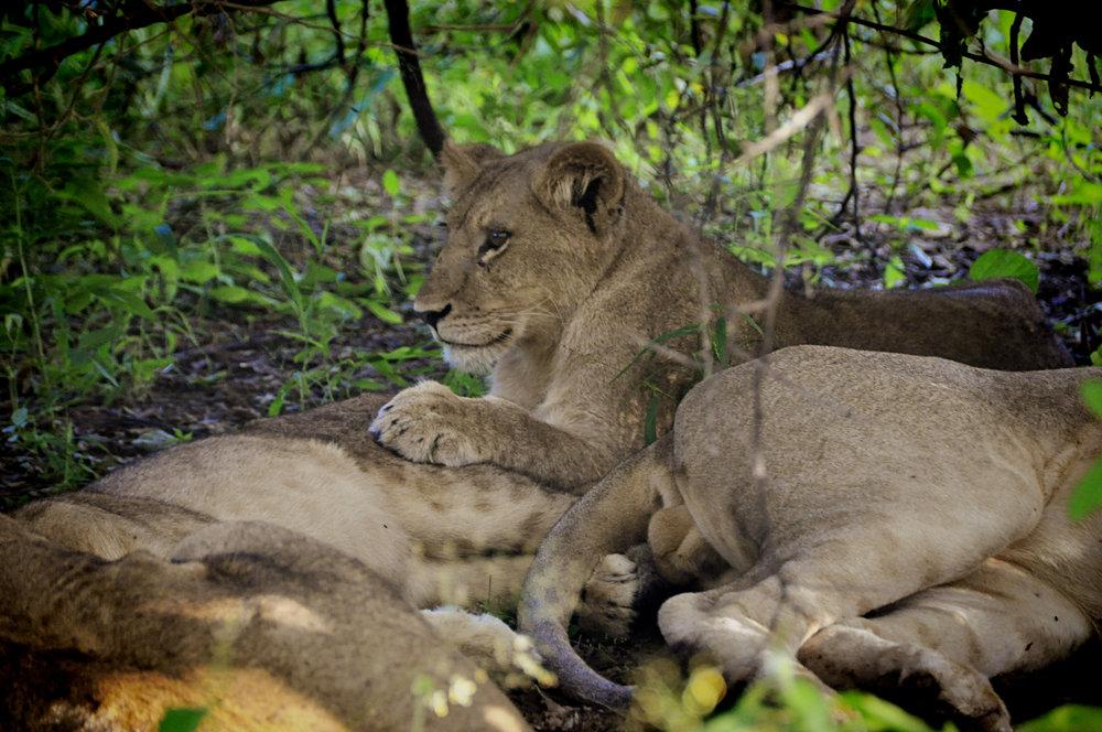 Africa-Botswana-146.jpg