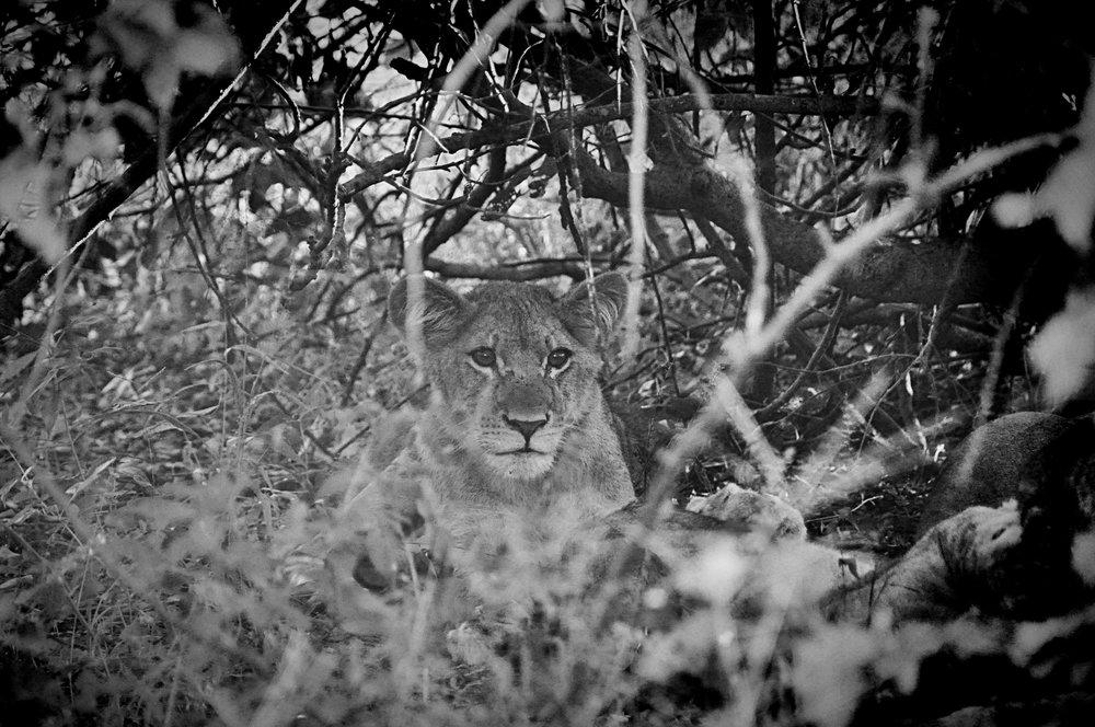 Africa-Botswana-149.jpg
