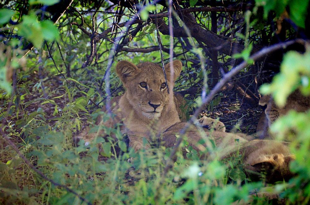 Africa-Botswana-150.jpg