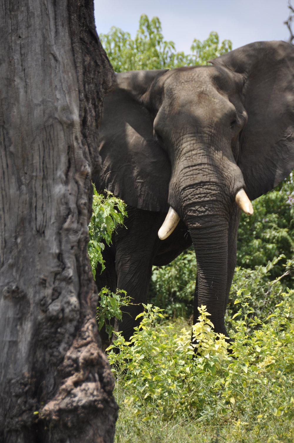 Africa-Botswana-110.jpg