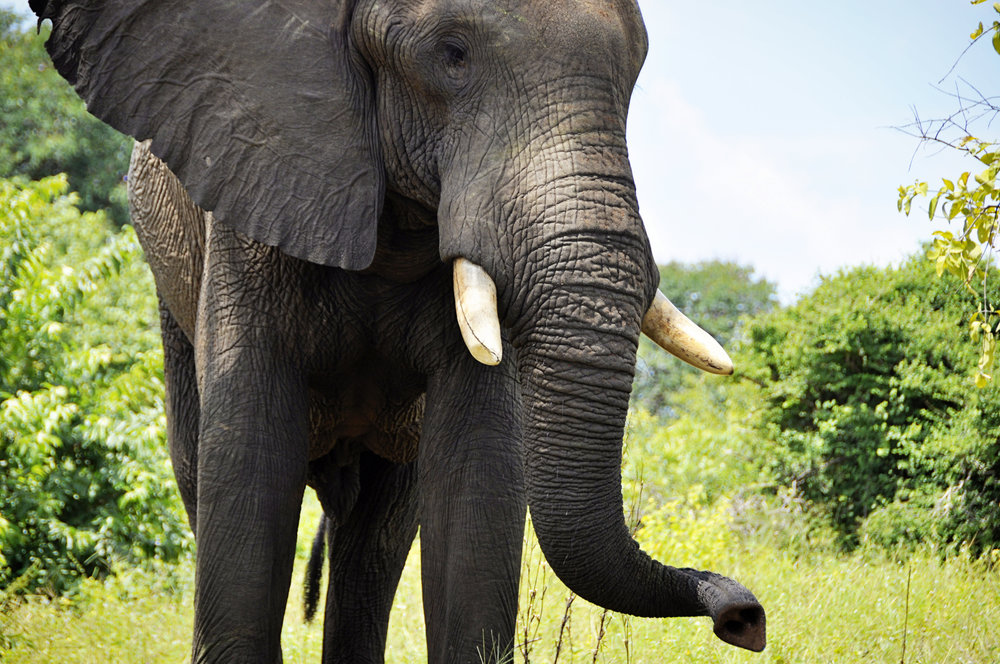 Africa-Botswana-115.jpg
