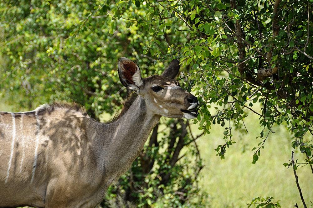 Africa-Botswana-116.jpg