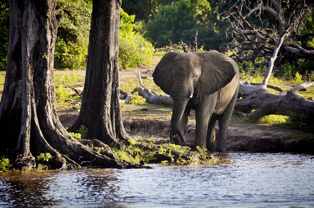 Africa-Botswana-117.jpg
