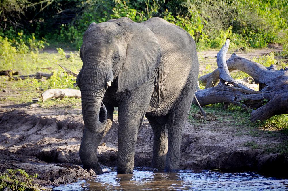 Africa-Botswana-118.jpg